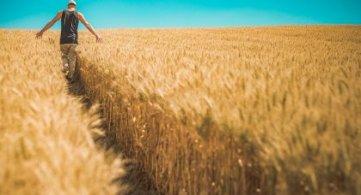 Rolniku, zachowaj ostrożność podczas żniw